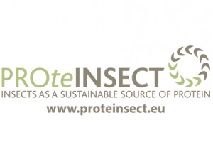 Protein Insect
